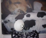 Archidog Cow