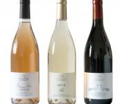 Etichette Vini Santa Maria del Morige