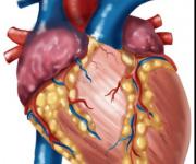illustrazione cuore