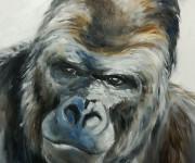Gorilla in blue