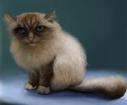Tony the cat_01_rez