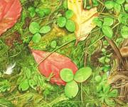Funghi chiodini (ai limiti dell'habitat)