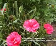 2004-08 17fiori0136