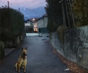 Dog in the street_01_rez