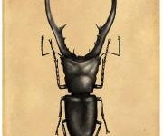 insetto cervo 2