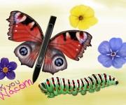 wacom spring