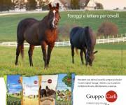Annuncio cavalli-Gruppo Carli
