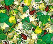 ragni - pubblicato su Pimpa