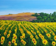 Provence and sunflowers