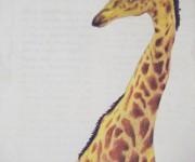 giraffa-pool.JPG