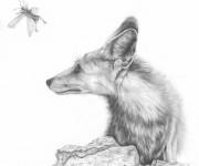 durante fox in sinai