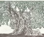 l'olivo patriarca