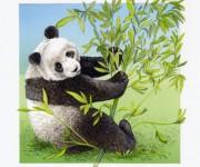 Panda / Fleurus